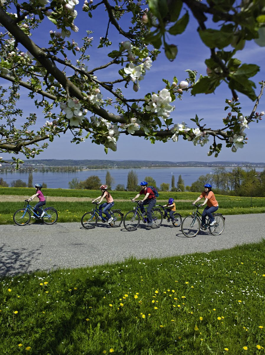 THURGAU - Radfahrer geniessen die Fruehlings Bluetenpracht oberhalb vom Untersee.  Cyclists enjoy the spring bloom above the Untersee.  Copyright by Thurgau Tourismus    By-line: swiss-image.ch/Alex Buschor